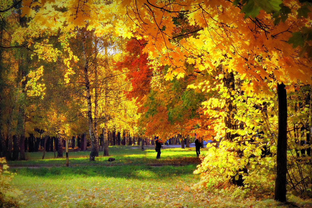Пятницы, картинки осенний листопад в парке