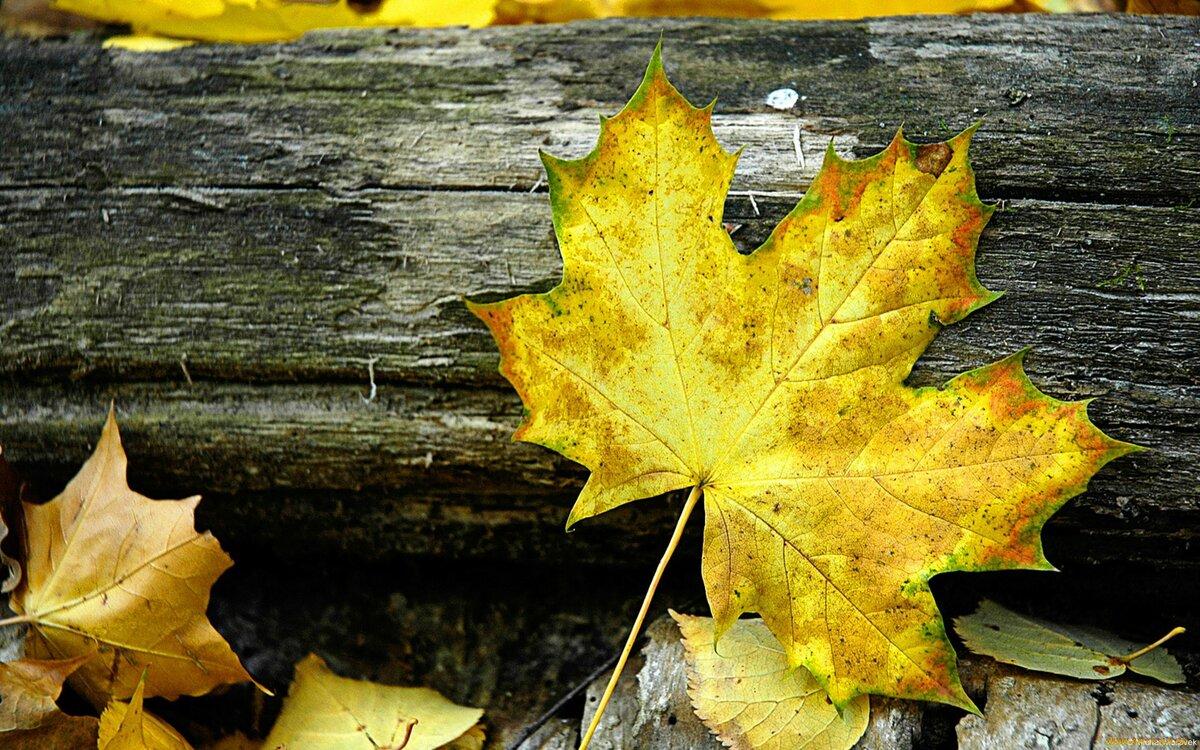 Сделать, картинки листьев желтых