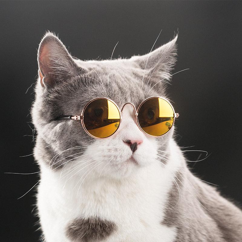 Поздравления чекистам, прикольный кот на аву