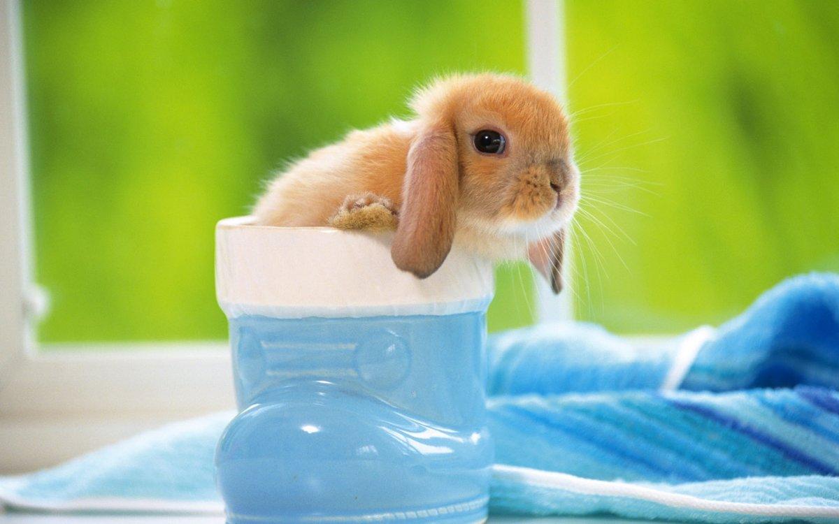 Животные фото красивые и милые, надписью