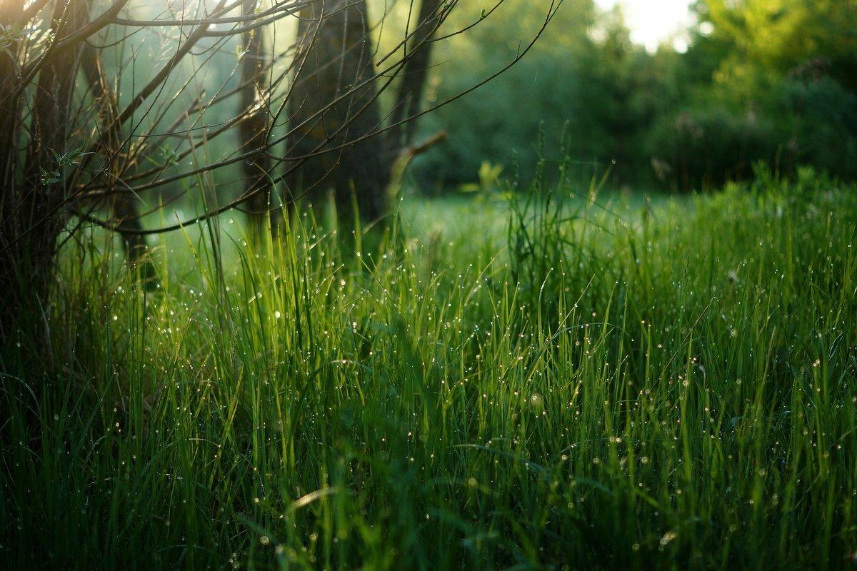 как сделать картинка утро трава природа секционная, градиентная пряжи
