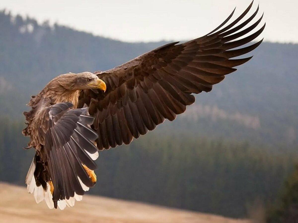 приветствия способны хищные птицы фото в высоком качестве этих