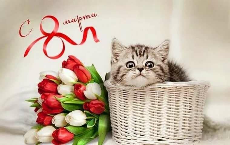 Картинки с котиками с 8 марта