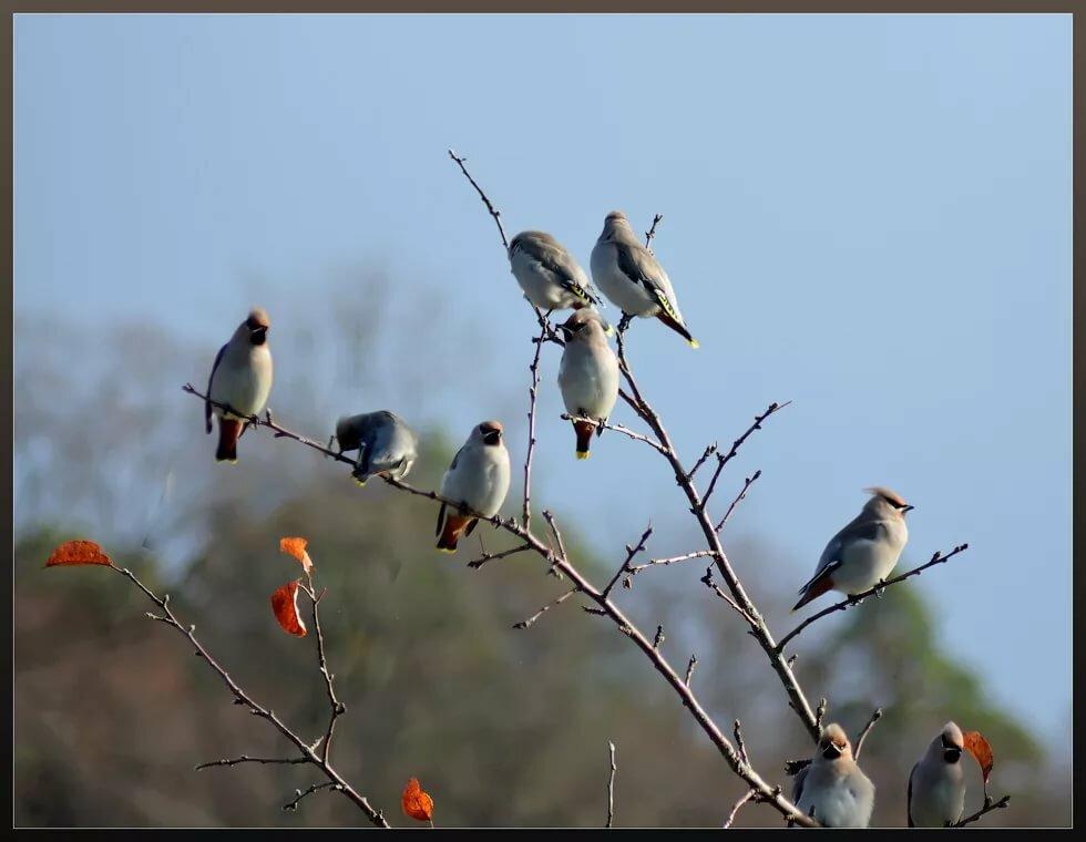 довольно хороший какие птицы первые прилетают на юг фото подарили сулейману честь