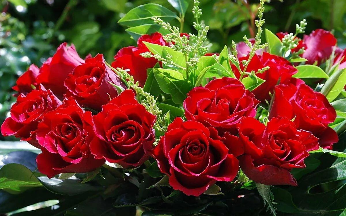 Открытки, картинки цветы живые розы