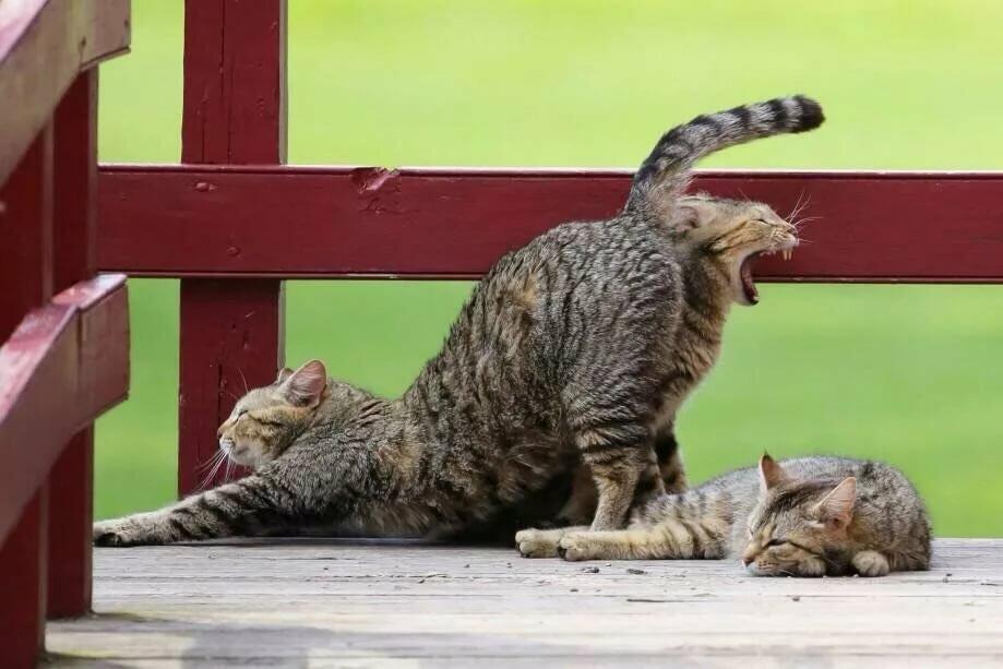 Для, кошки картинки и приколы