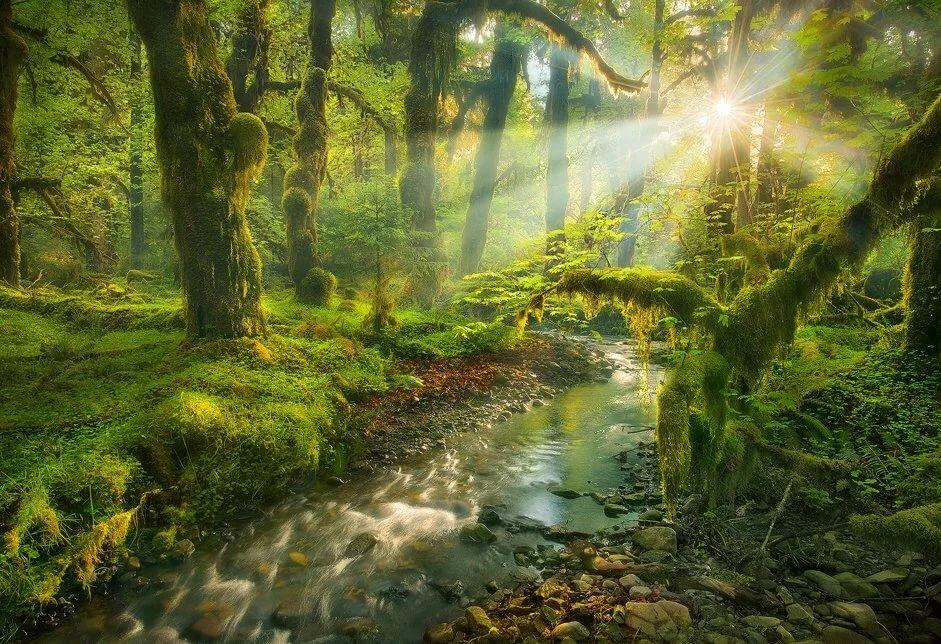 Новый, картинки о лесе