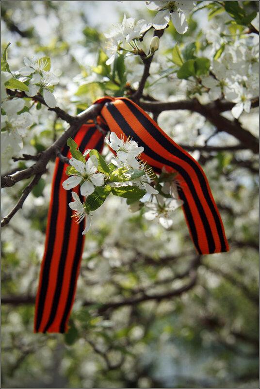 Красивые, картинки георгиевские ленточки с цветами
