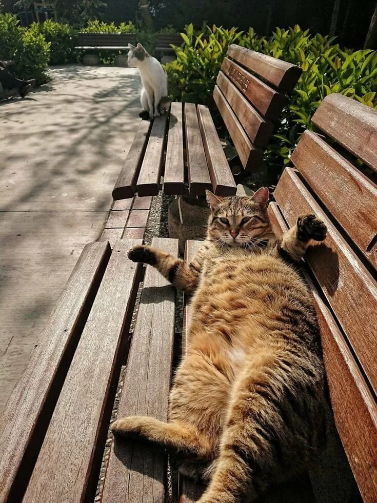 Can you sit on the other bench human, I'm sunning so if you don't mind! Frig off!! cats & family are pawesome Pinterest