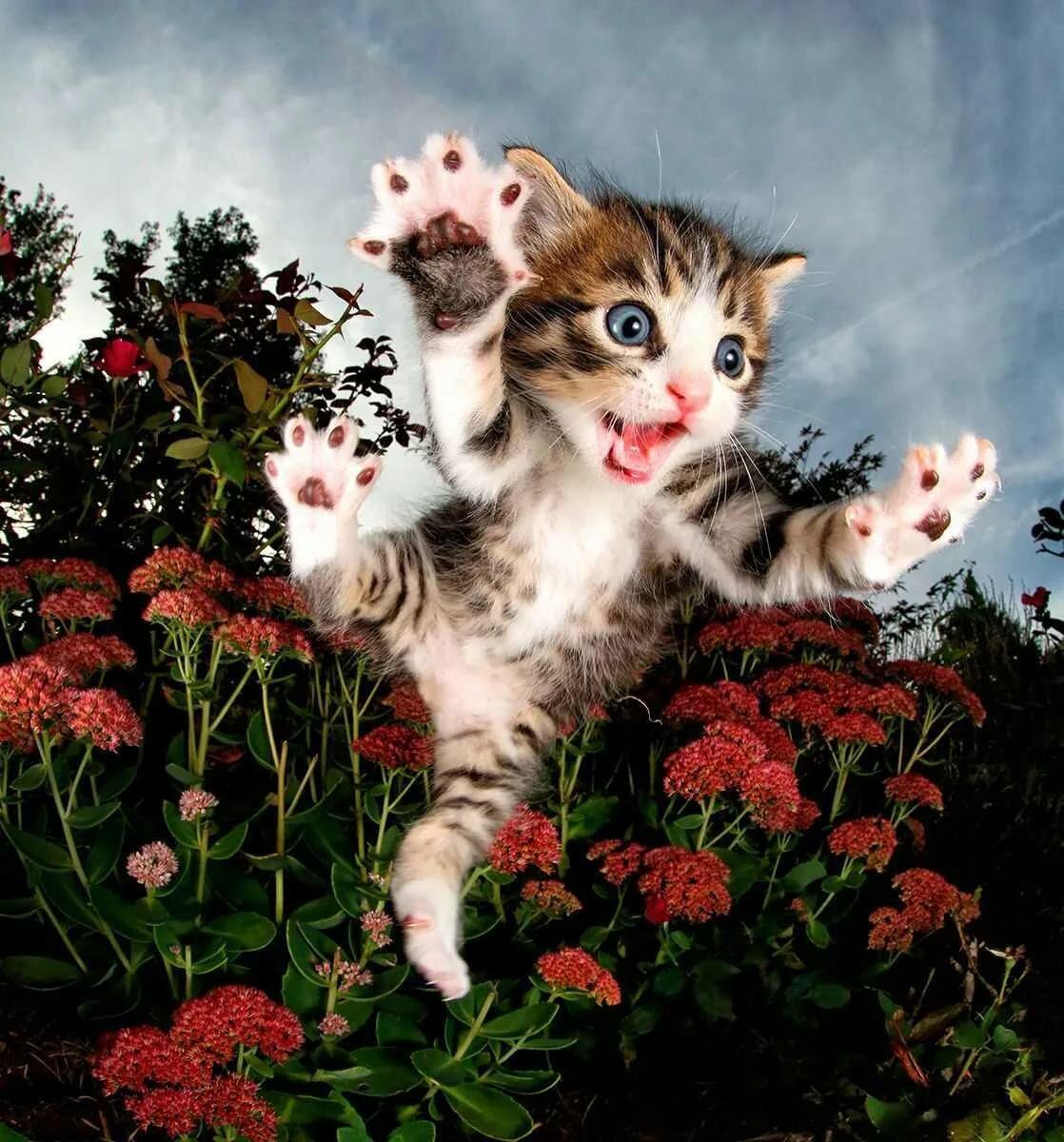 Приколы смешные, картинки прикольный котята