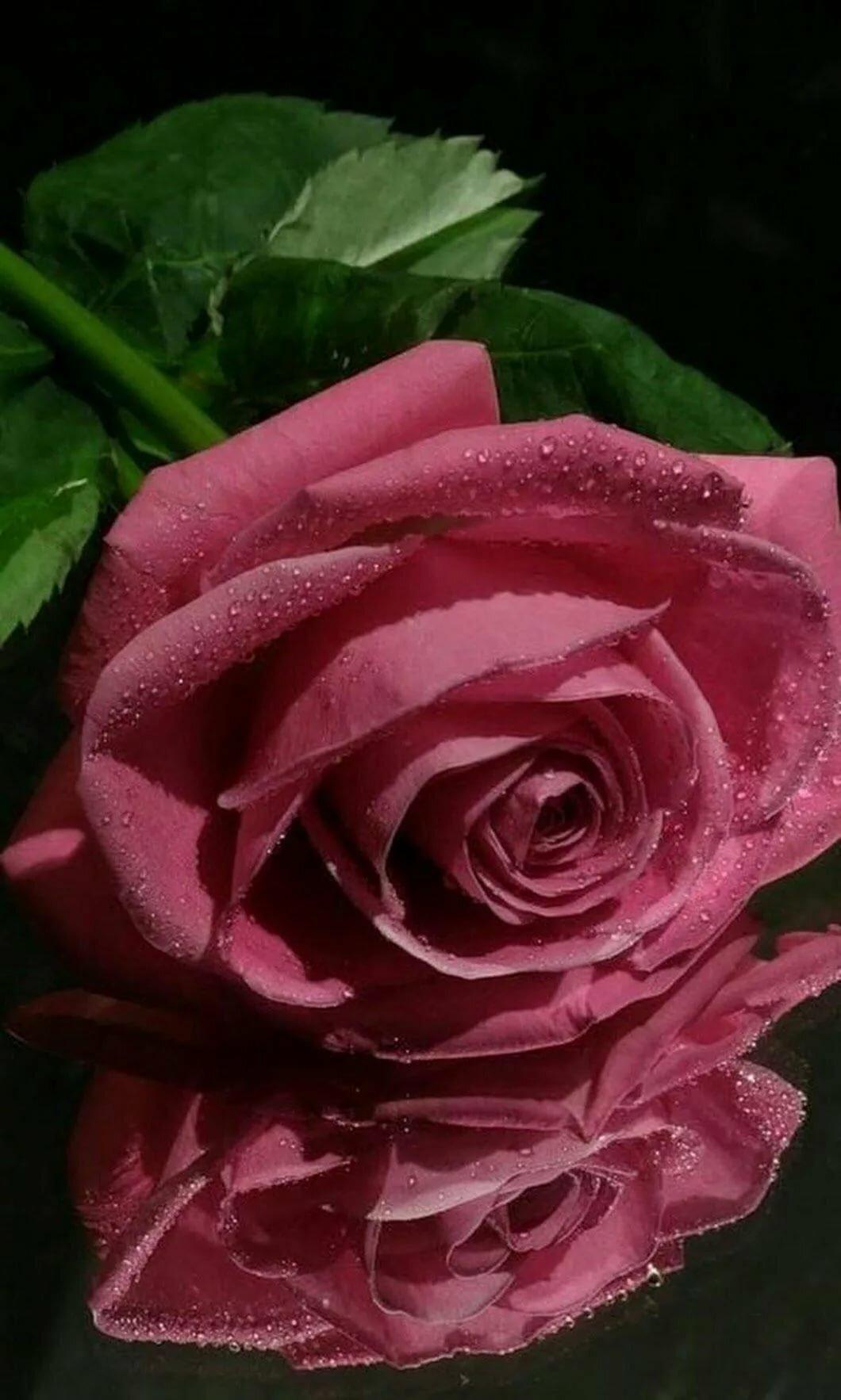 Розовая роза анимации картинки