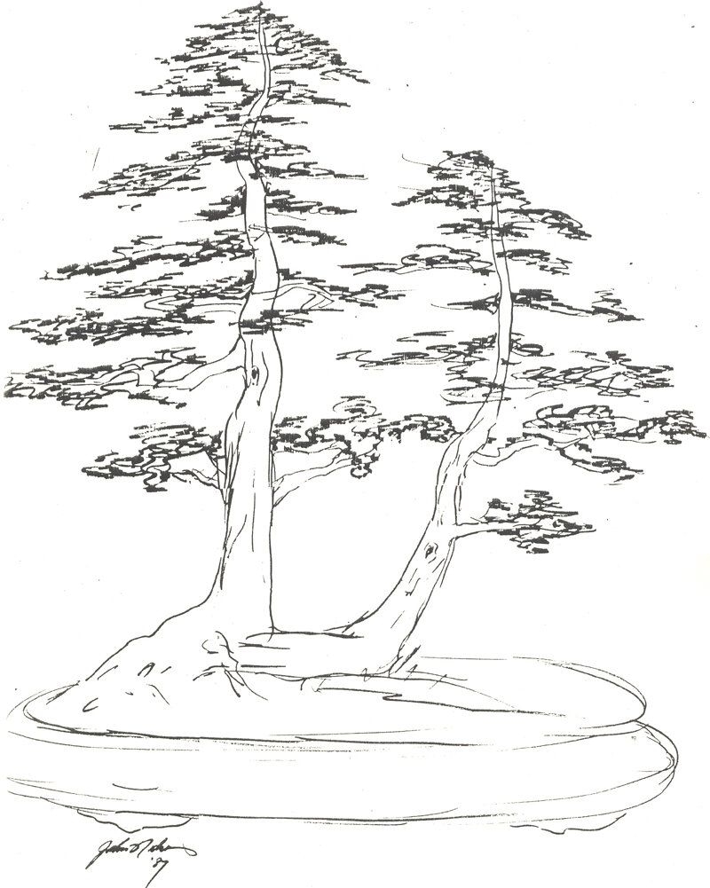 Картинка как нарисовать сосну карандашом поэтапно