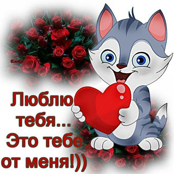Картинки люблю тебя мой родной котик