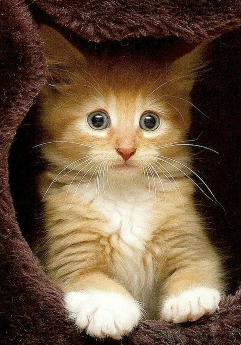 Милые смешные кошки картинки