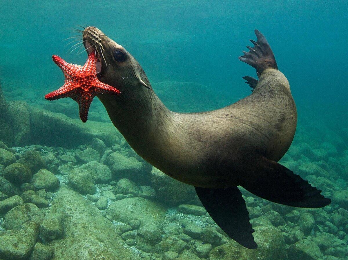 Морские обитатели картинки фото