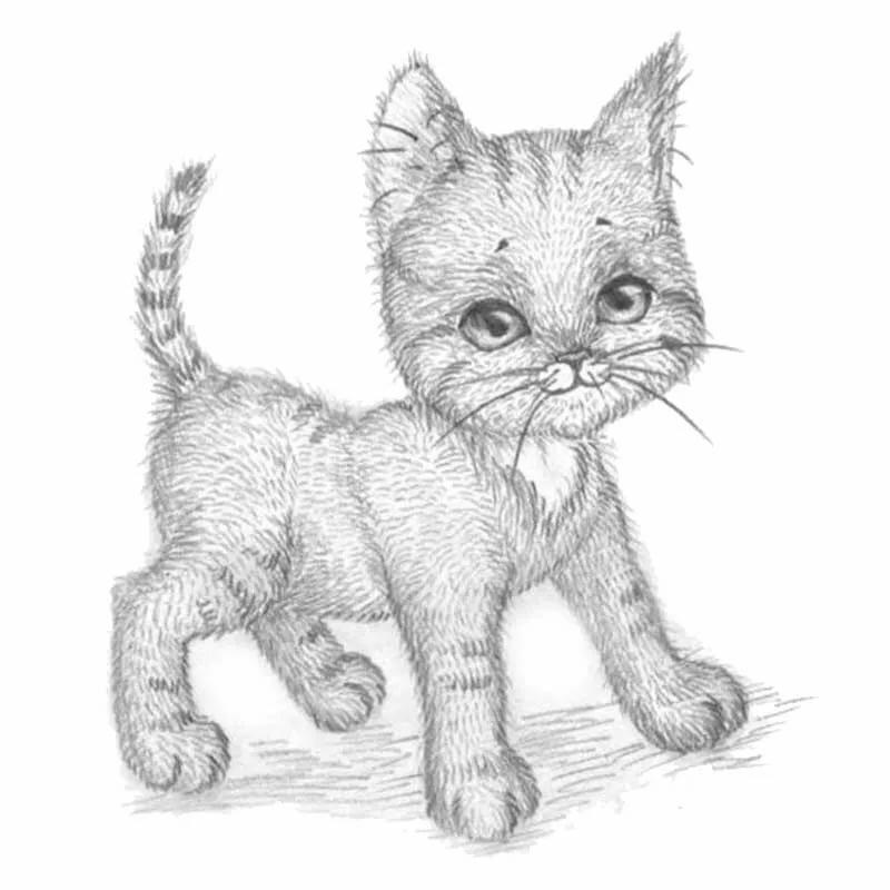 Кошки картинки срисовать