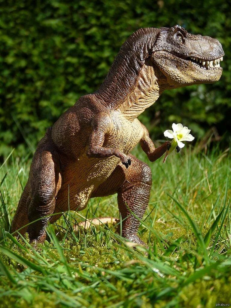 фотки динозавров настоящих актриса