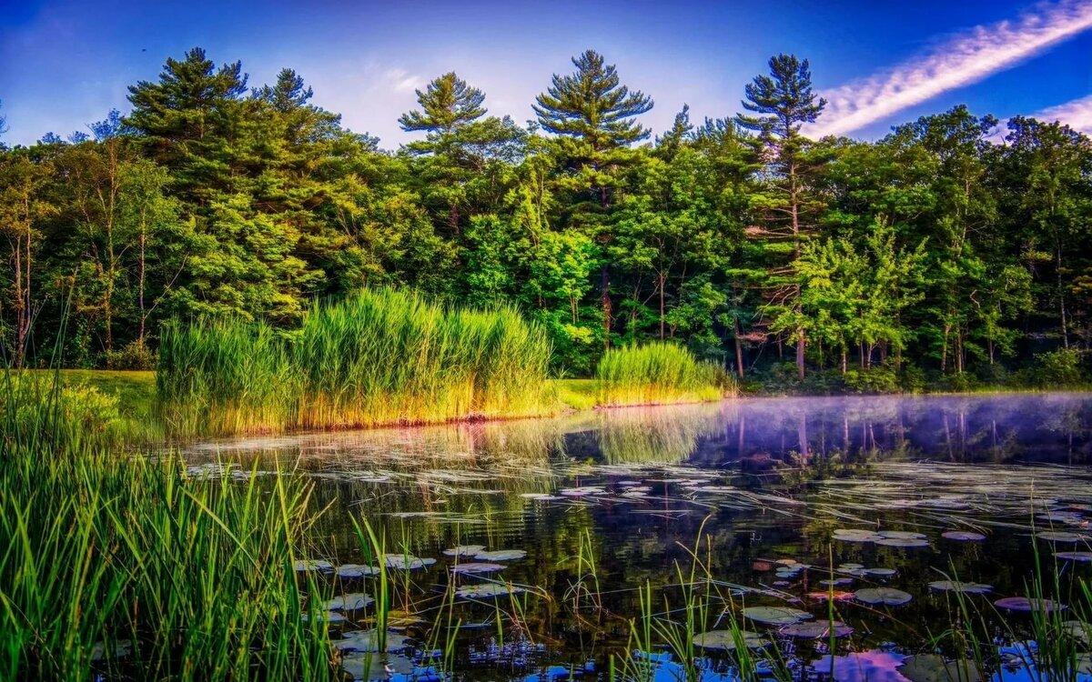 Картинки озера с лесом