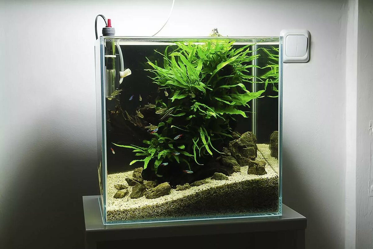 нано аквариум картинки ремонт замковых