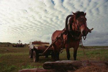 лошадь с тележкой я сена