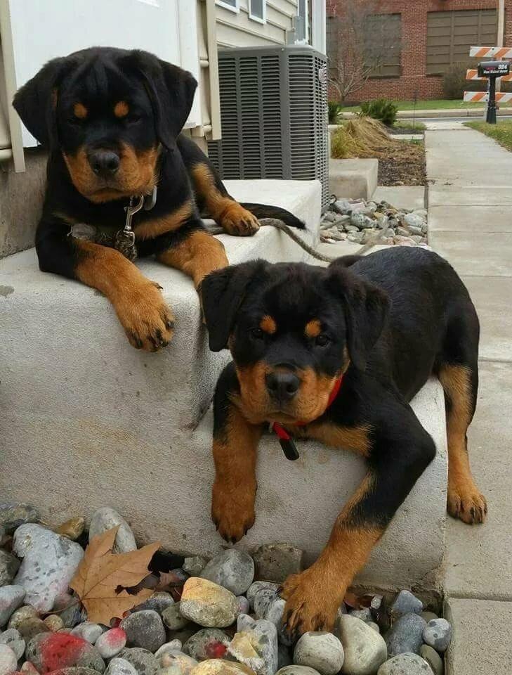Прикольные картинки сторожевых собак