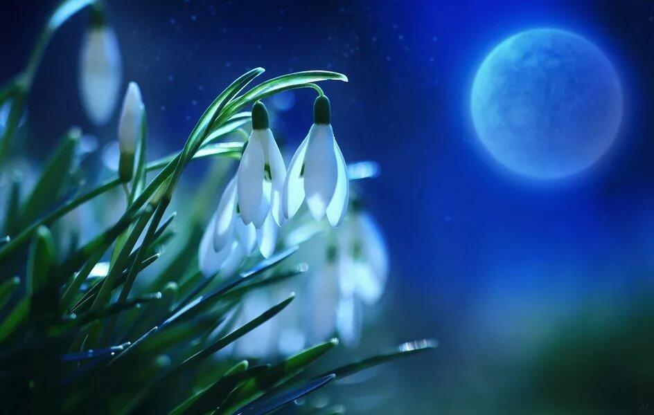 для красивые картинки весенние цветы в ночи отправляются