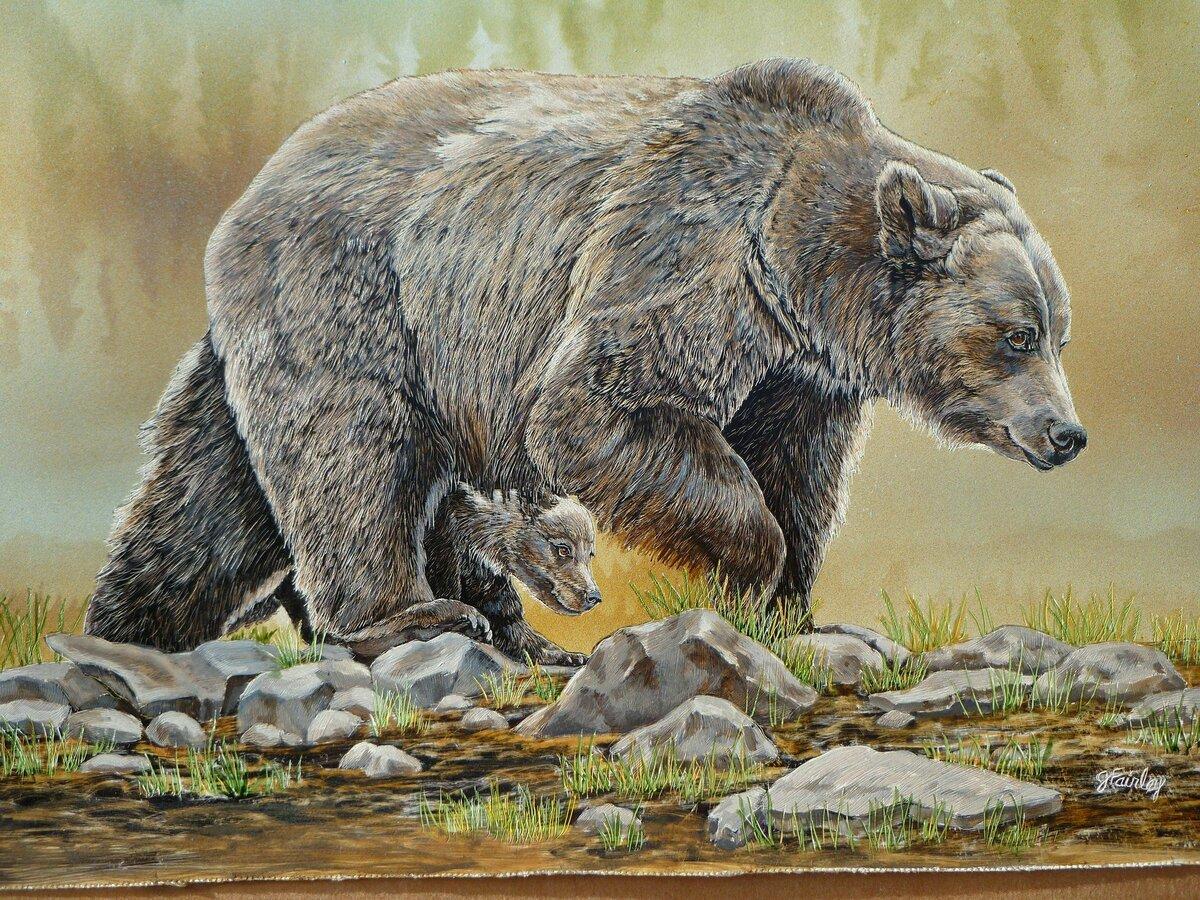 рисунок бурый медведь в природе писала попытке бегства
