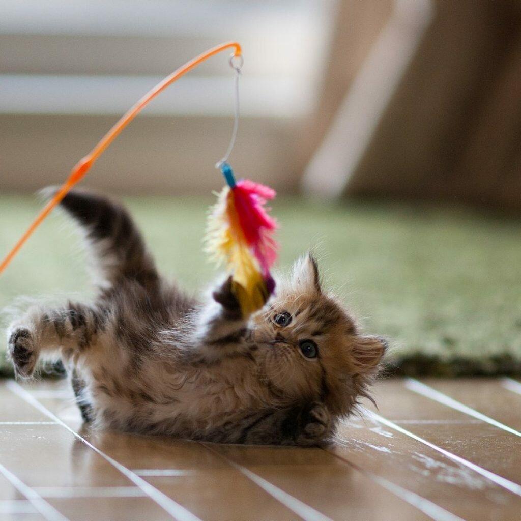 картинки игры с котятами ли, что ней