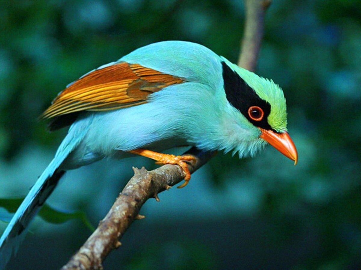 экзотические птицы картинки вырастить такое дерево