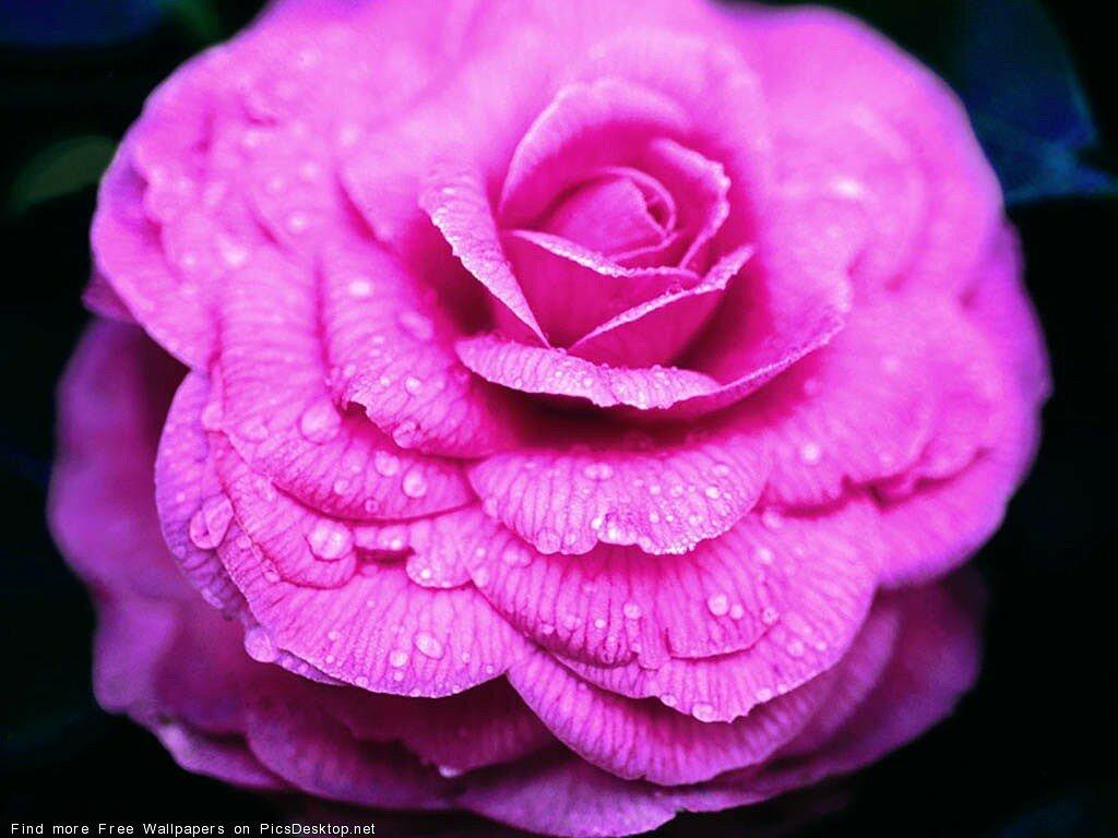 картинки на аву цветы большой размер фотографе даниил