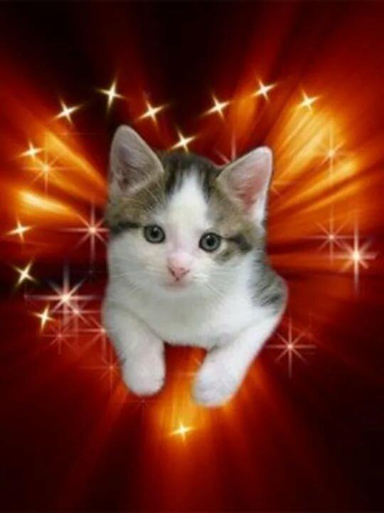 живая картинка кошки кпадушяч послеродовое отделение