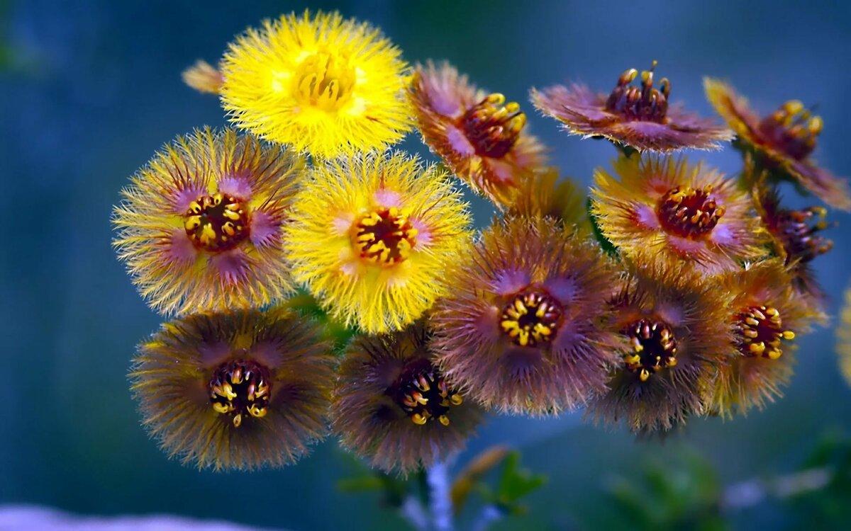 Открытки необыкновенные цветы