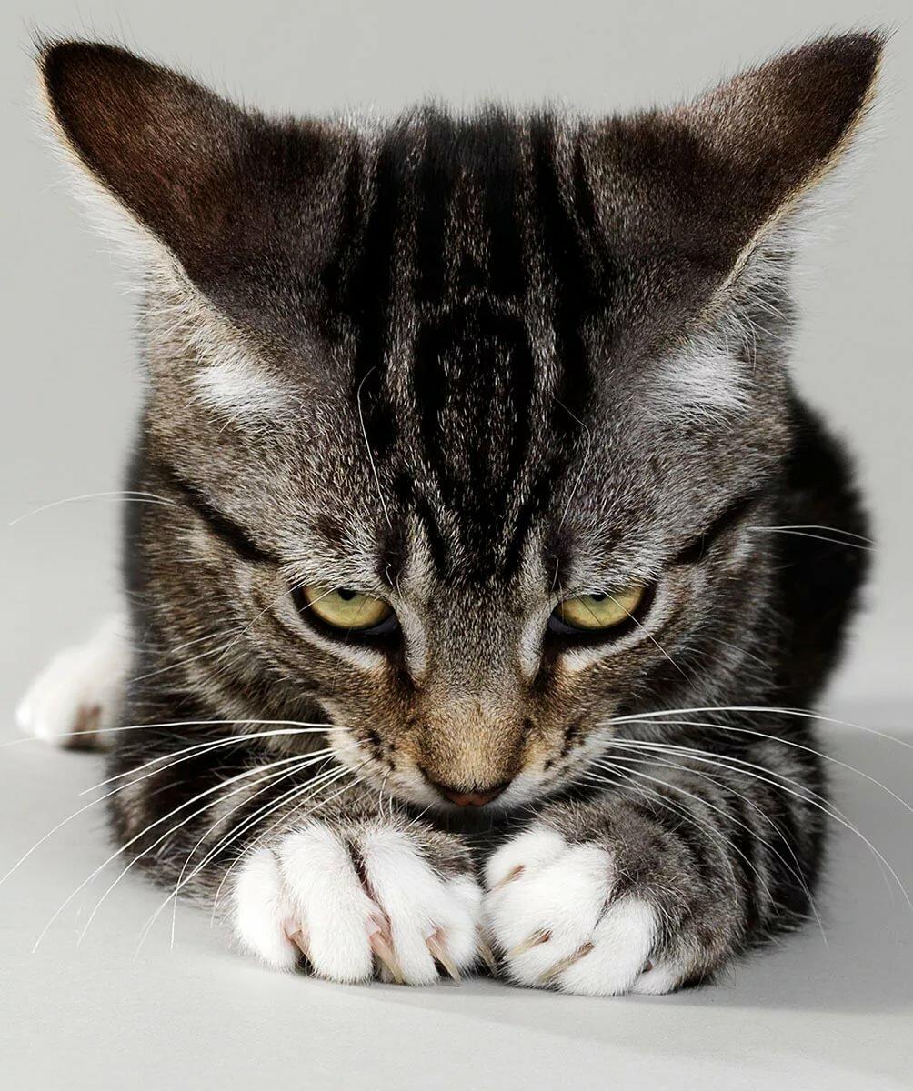Картинки виноватая кошка