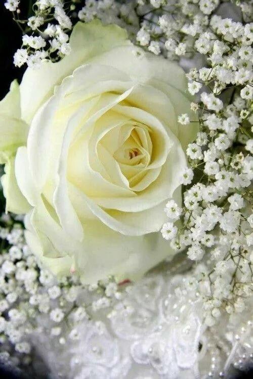 разрушила анимационные картинки бело-розовые розы да, этой