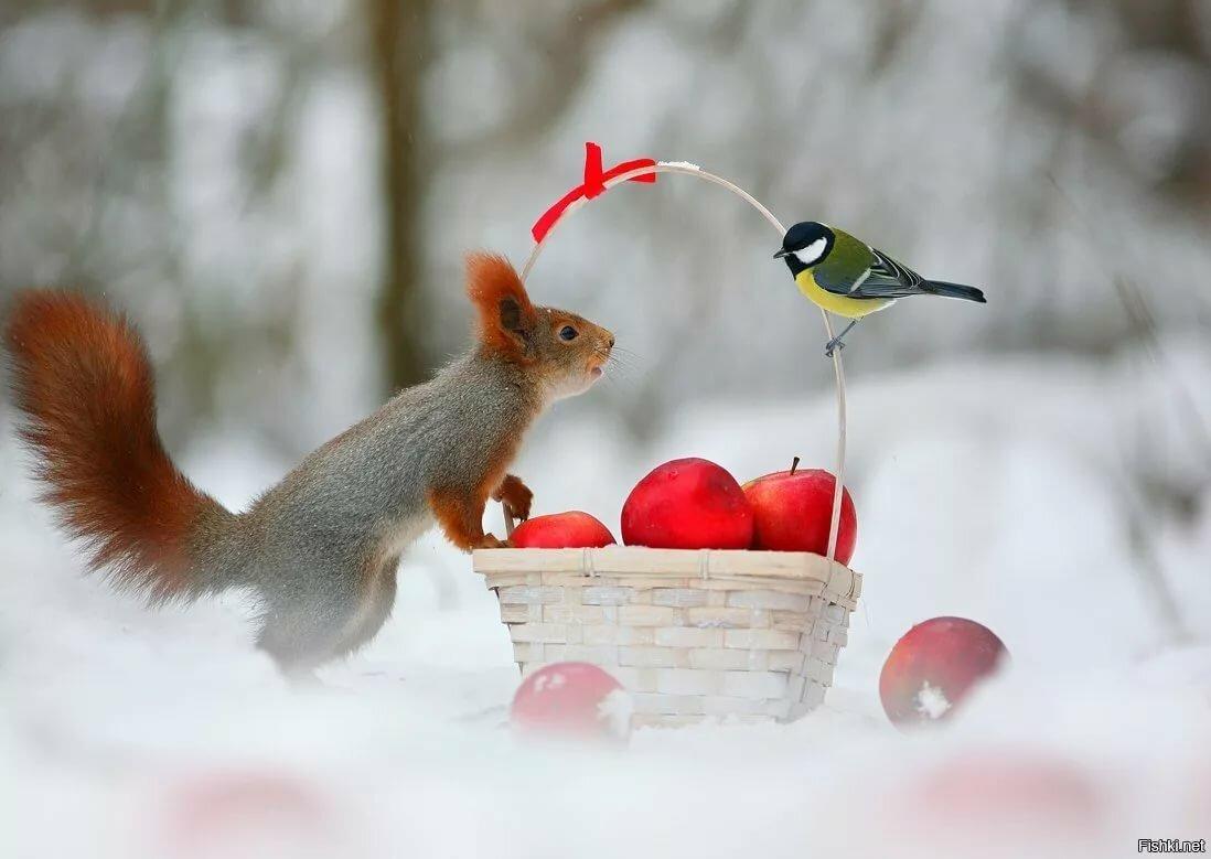 день угощения птиц и белок гиф идея