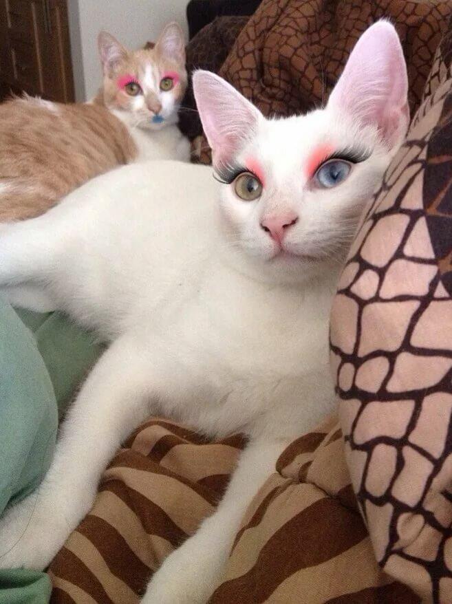 кошку накрасили картинки статья предоставляет