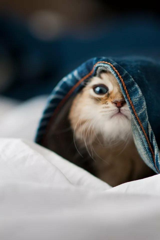 таких картинки котят в джинсах эпоху италии портрет