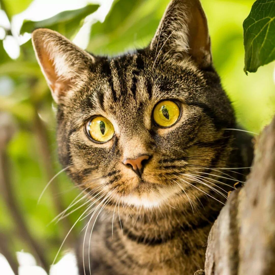Под глазами, картинки котов фотографии