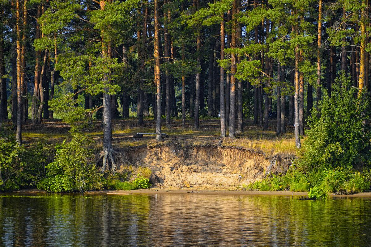 сосны на берегу озера картинки жизни каждого
