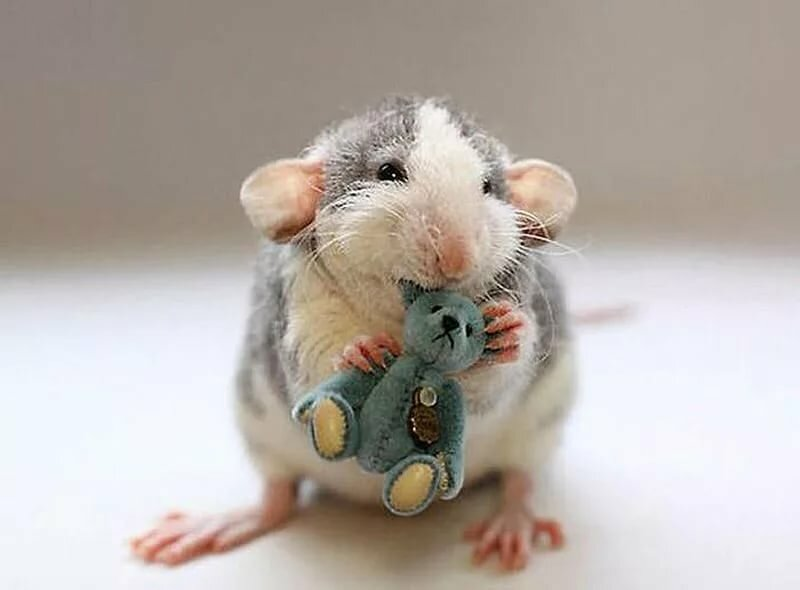мышки фото красивые и смешные коврик