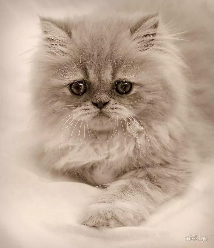 кореновске картинки скучаю с котами ехали