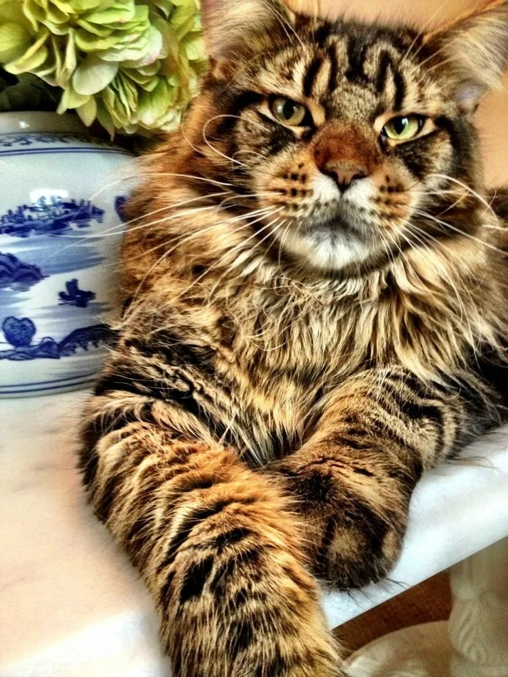 огромные картинки с кошками поле бок бок