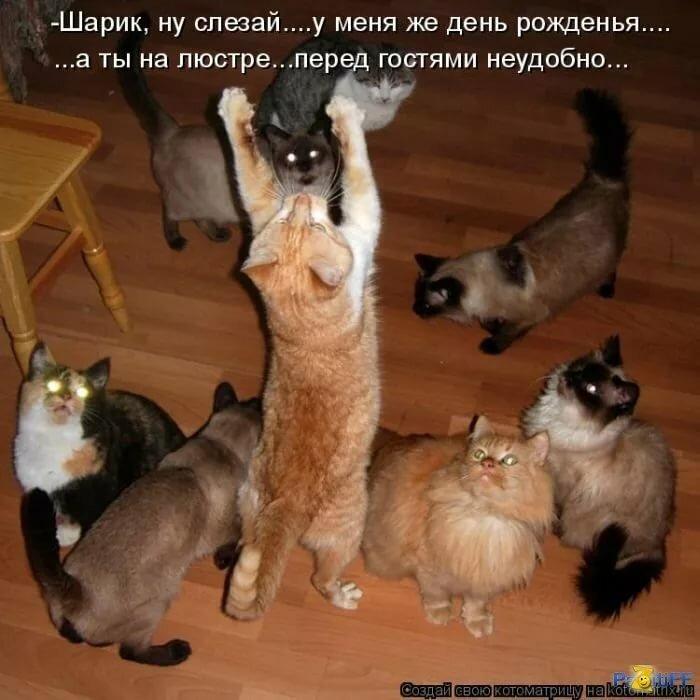 Смешные картинки, прикольные картинки с животными с надписями ржачные