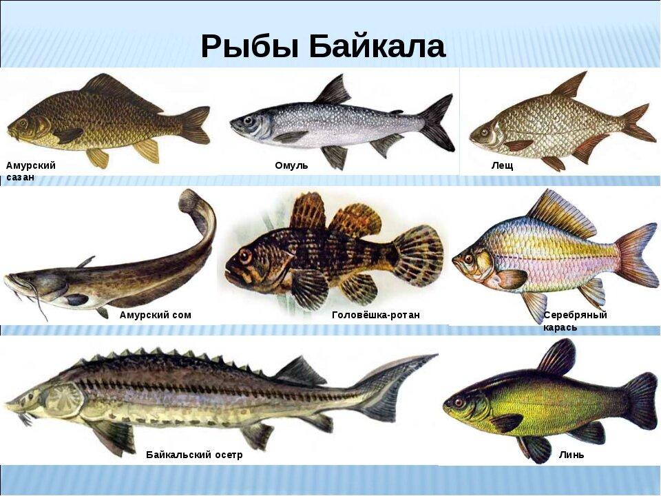 Подпиши под картинками недостающие названия рыб