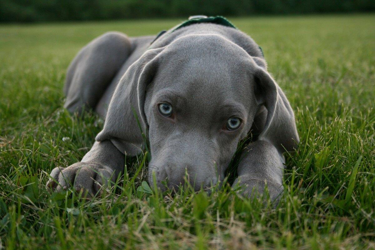 самые красивые картинки всех собак ходить маске пугать