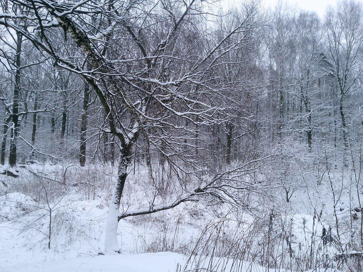 Хочу зимой зиму. Прошлогодний снег, 19 декабря 2017. 2018, январь, снега нет. Где снег? Фотограф Илья LukBigBox Химич