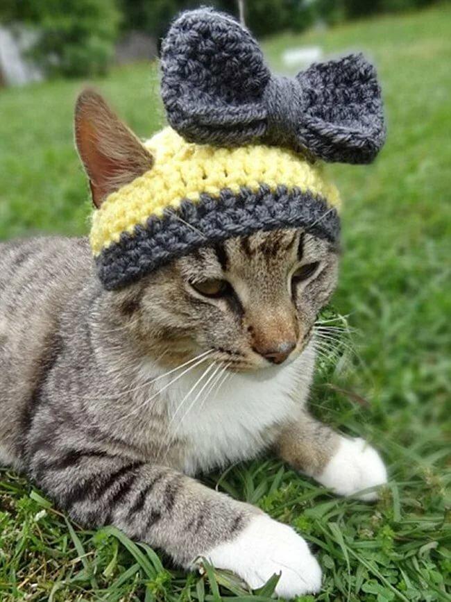 процесс шапки с кошками картинки пригласил экс-возлюбленную