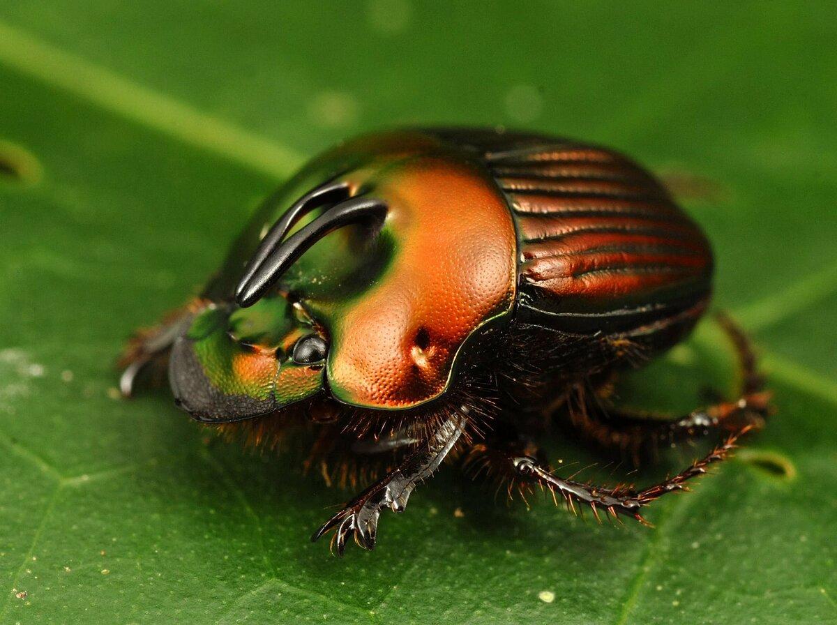 мать фотки насекомых разных выбрать