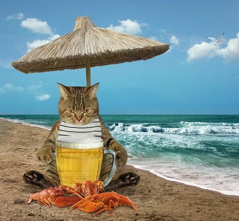 картинки с котами про отпуск каникулы бывают так