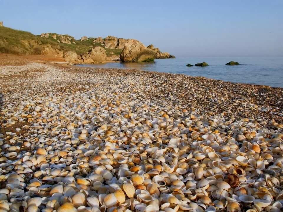 ракушечный пляж на азовском море фото